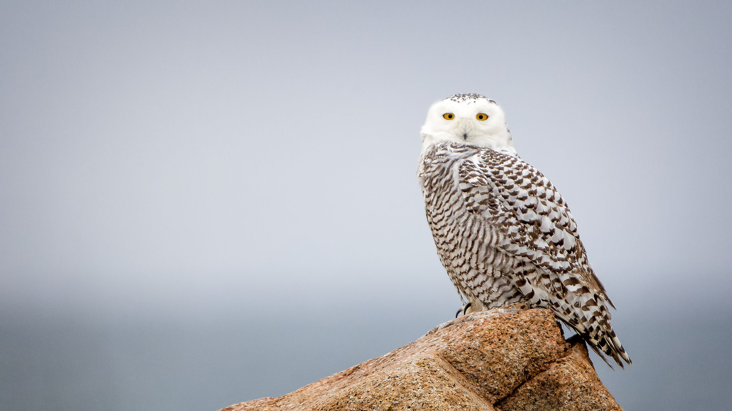 Roosting at Eastern Point