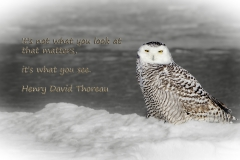 Roosting on an ice flow at Parker River NWR